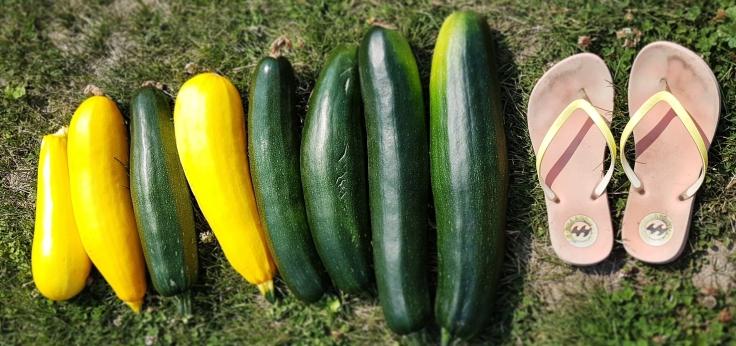 zucchini size chart