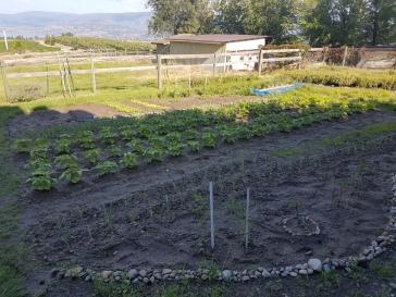 Garden: Year One